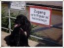 Bootfahren für Mensch & Hund