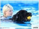 Schwimmen mit Hund