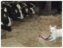 Training auf dem Bauernhof