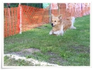 spasshundetag 046
