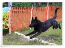 spasshundetag 058
