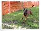spasshundetag 066